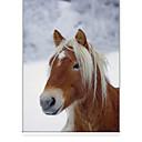 זול גאדג'טים לאמבט-סוס קלאסי בצל הרים חורף