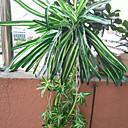 billige Kunstige planter-Kunstige blomster 1 Gren Moderne Stil Planter kurv av blomster