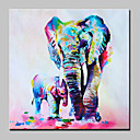 ราคาถูก ภาพวาดสัตว์-ภาพวาดสีน้ำมันแขวนทาสี มือวาด - งานศิลปะป๊อป ที่ทันสมัย รวมถึงด้านในกรอบ / ผ้าใบยืด