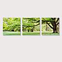 ราคาถูก ปรินต์-Print ลายผ้าแคนวาสยืด - Still Life Photographic ที่ทันสมัย สามภาพ ศิลปะภาพพิมพ์