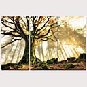 billige Gardiner-Trykk Strukket Lerret Trykk - Landskap Tradisjonell Moderne Tre Paneler Kunsttrykk
