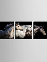 E-HOME Stretched Canvas Art Beautiful Horses Decoration Painting Set Of 3