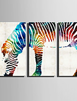 E-HOME Stretched Canvas Art Abstract Watercolor Zebra Decoration Painting Set Of 3