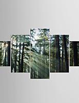 Aufgespannte Leinwandrucke Fünf Panele Leinwand jede Form Druck Wand Dekoration For Haus Dekoration