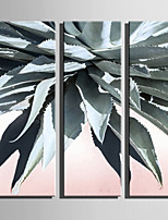 E-HOME Stretched Canvas Art Thorny Leaves Decoration Painting Set Of 3