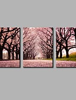 Sakura 3-Piece Modern Artwork Wall Art for Room Decoration 20x28inchx3