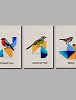 Classification of Birds  3-Piece Modern Artwork Wall Art for Room Decoration 20x28inchx3