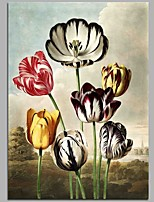 Tulipa Gesneriana L. cv. La Courtine 100% Hand Painted Oil Paintings Modern Artwork Wall Art for Room Decoration