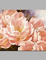 cheap -Paeonia lactiflora Pall 100% Hand Painted Oil Paintings Modern Artwork Wall Art for Room Decoration