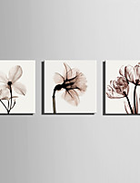 3 Canvas Square Print Wall Decor For Home Decoration