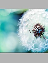 Dandelion Modern Artwork Wall Decoration For Room Decoration