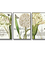cheap -Botanical Cartoon Illustration Wall Art,Plastic Material With Frame For Home Decoration Frame Art Living Room
