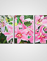 cheap -Stretched Canvas Print Comtemporary,Three Panels Canvas Horizontal Print Wall Decor Home Decoration