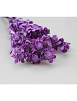 cheap -Wedding / Party Dried Flower Wedding Decorations Floral/Botanicals / Garden Theme / Romance / Fantacy / Birthday / Friends / Family /