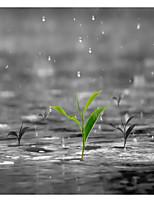 Недорогие -Занавески и крючки Деревенский Полиэстер Растения Цветочные / ботанический механически Водонепроницаемый Ванная комната