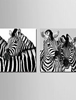 cheap -Print Stretched Canvas Prints - Animals / Photographic Modern