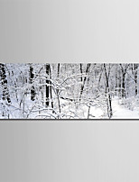 cheap -Print Rolled Canvas Prints - Winter / Photographic Modern