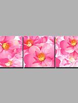 abordables -Imprimé Impressions sur toile roulées / Impression sur Toile - Botanique / A fleurs / Botanique Rétro / Moderne