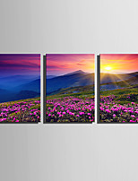 cheap -Print Rolled Canvas Prints / Stretched Canvas Prints - Landscape / Natures & Outdoors Modern