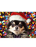 Недорогие -Коврики Рождество силикагель, Прямоугольная Высшее качество плед