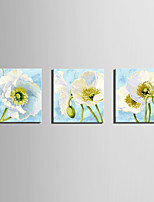 cheap -Print Rolled Canvas Prints / Stretched Canvas Prints - Botanical / Floral / Botanical Modern