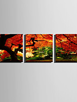 cheap -Print Rolled Canvas Prints / Stretched Canvas Prints - Landscape / Botanical Modern