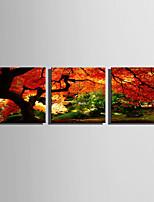 Недорогие -С картинкой Роликовые холсты / Отпечатки на холсте - Пейзаж / ботанический Modern