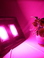 Недорогие -BRELONG® 1шт 100 W 8000 lm lm 2 Светодиодные бусины Полного спектра Растущие светильники UV (лампа черного света) 220-240 V