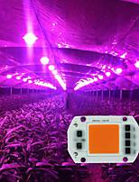 Недорогие -5 шт. Светодиодные лампы роста растений теплый белый свет белого света ac220v ac110v 20 Вт 30 Вт 50 Вт лампа удара источника света аксессуары из бисера diy светодиодный прожектор прожектор