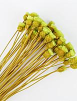 Недорогие -Искусственные Цветы 50 Филиал Классический С креплением на стену подвешенный Стиль Простой стиль Вечные цветы Букеты на стол