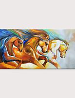 Недорогие -Hang-роспись маслом Ручная роспись - Абстракция Животные Modern Без внутренней части рамки