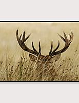 Недорогие -Отпечаток в раме Набор в раме - Пейзаж Животные Полистирен Фотографии Предметы искусства