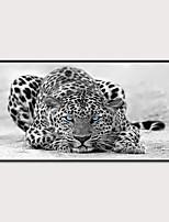 Недорогие -Отпечаток в раме Набор в раме - Животные Полистирен Иллюстрации Предметы искусства