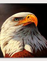 Недорогие -Hang-роспись маслом Ручная роспись - Абстракция Животные Modern Включите внутренний каркас