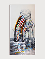cheap -Print Rolled Canvas Painting Color Zebras Modern Art Prints without Stretcher