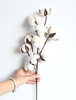 cheap -1 Branch Natural Dry Cotton Branch Home Decor Living Room Creative Display Artificial Flowers