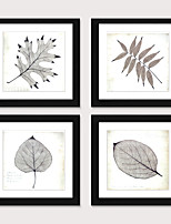 cheap -Framed Art Print Framed Set 4 - Boreal Europe Style Plant Specimens PS Illustration Wall Art