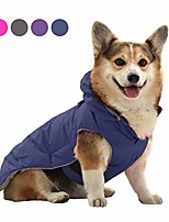 cheap -warm coat with cute pocket (purple)