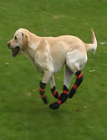 cheap -all weather dog boots greyhound-type dogs with very sensitive skin. protect paws from glass, stones, coral, heat, ice or snow ball formation, cold. orthopedic design give free movement