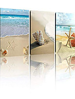 cheap -3 piece black and white modern decor seascape seashells on the beach pictures to photo paintings on canvas wall art for bathroom
