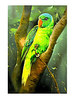 cheap -IARTS Hand Painted parrot Oil Painting   with Stretched Frame For Home Decoration