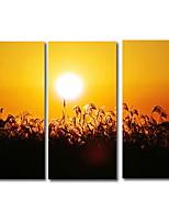 cheap -3 Panels Wall Art Canvas Prints Painting Artwork Picture Dusk Sunset Plant Landscape Home Decoration Décor Rolled Canvas No Frame Unframed Unstretched