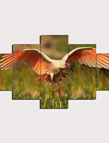 cheap -5 Panels Wall Art Canvas Prints Painting Artwork Picture Bird Painting Home Decoration Decor Rolled Canvas No Frame Unframed Unstretched