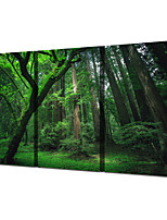 cheap -3 Panels Wall Art Canvas Prints Painting Artwork Picture Forest Green Tree Home Decoration Decor Rolled Canvas No Frame Unframed Unstretched