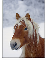 cheap -Classic Horse In Winter Roller Shade