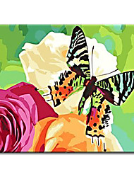 cheap -Decorative Hand Painted Oil Painting Pictures Butterfly Flower with Stretched Frame Ready to Hang