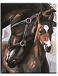cheap -Hand Painted Oil Painting Home Decor Handwork Gifts Of Horse with Stretched Frame Ready to Hang