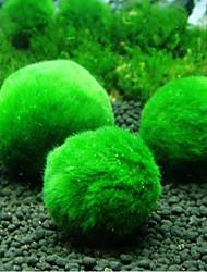 cheap -Genuine Aquarium Ball Landscaping Chlorella Algae Marimo Happy Environmental Green Seaweed Ball