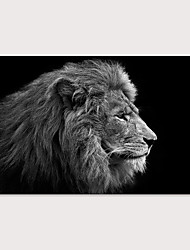 cheap -Print Stretched Canvas Prints - Animals Modern Art Prints