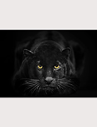 cheap -Print Stretched Canvas Prints - Animals Photographic Modern Art Prints